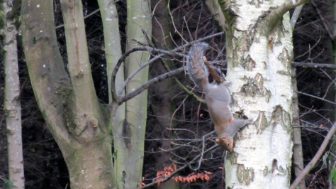 12th b'ak'tun squirrel