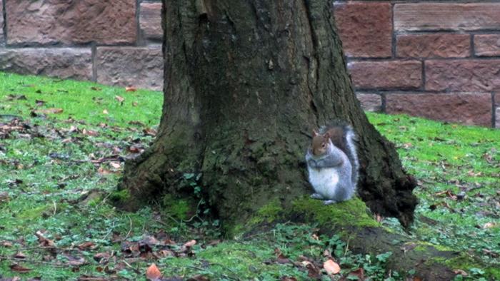 14th b'ak'tun squirrel